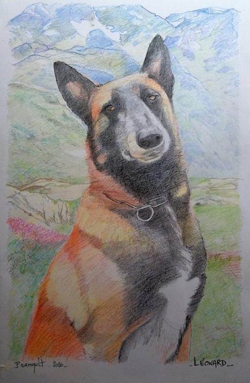image de portrait animalier aux crayons de couleursr