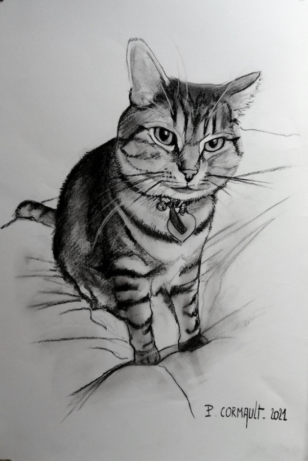 image de portrait animalier